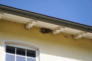 軒下に作られたツバメの巣