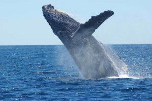 クジラの跳躍