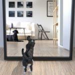 【不幸の前兆!?】鏡が割れるのは不吉?それとも縁起が良いこと?鏡の危険な扱いも合わせて解説!