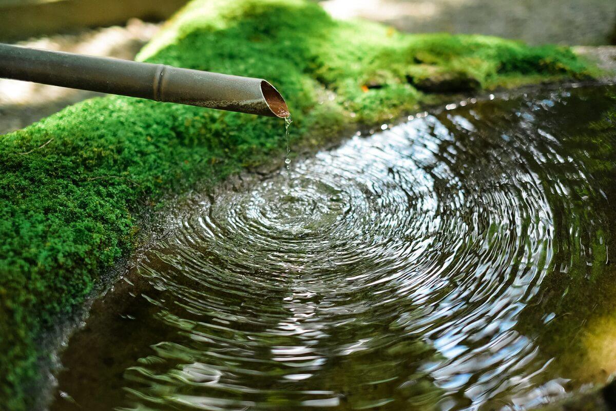 水面に広がる水紋