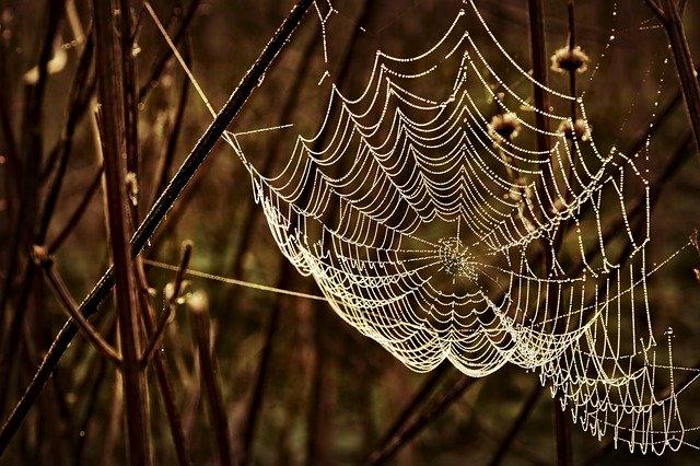 雨に濡れた蜘蛛の巣